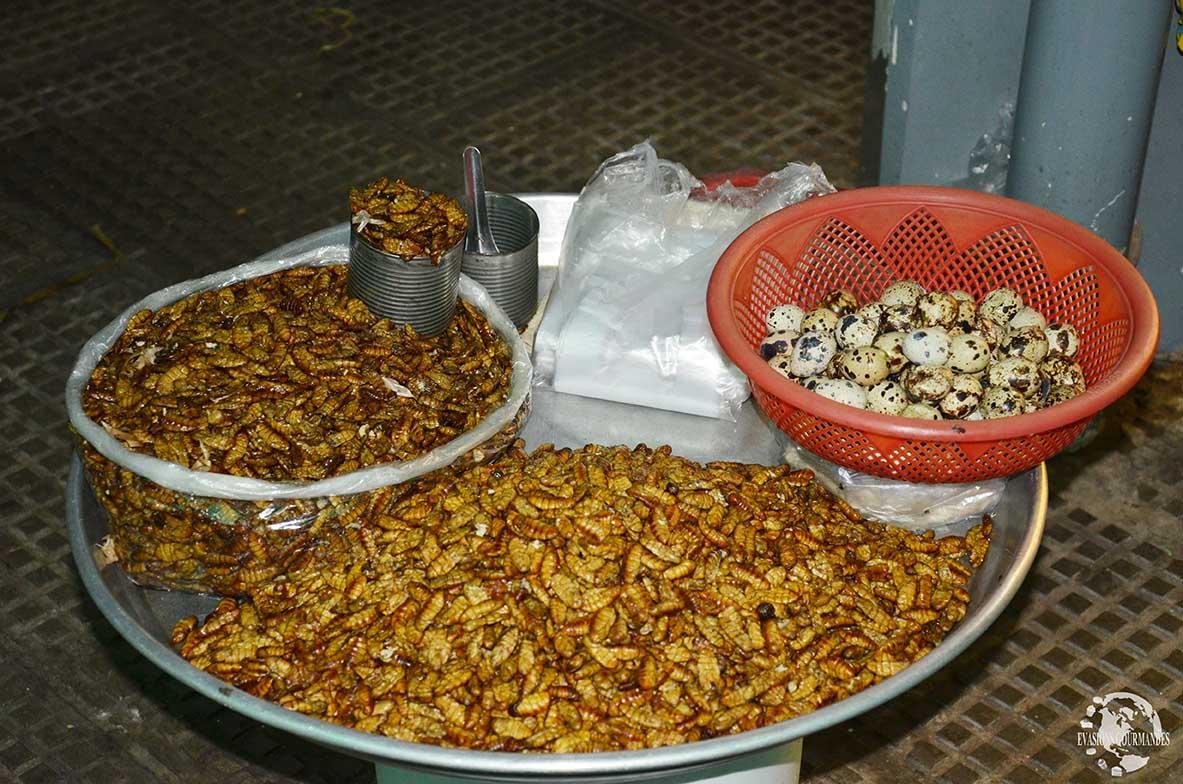 Insecte Cambodge