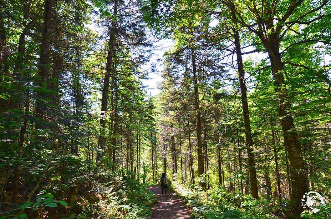 Parc National de la Jacques-Cartier