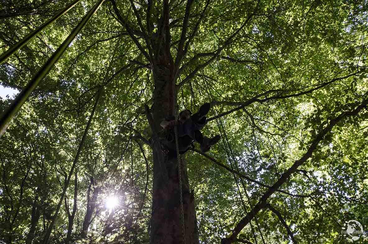 Grimpe dans les arbres