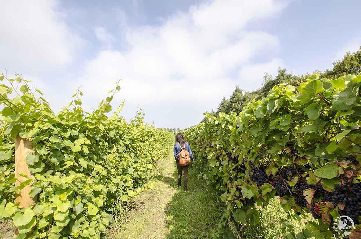 Mare Wine Estate