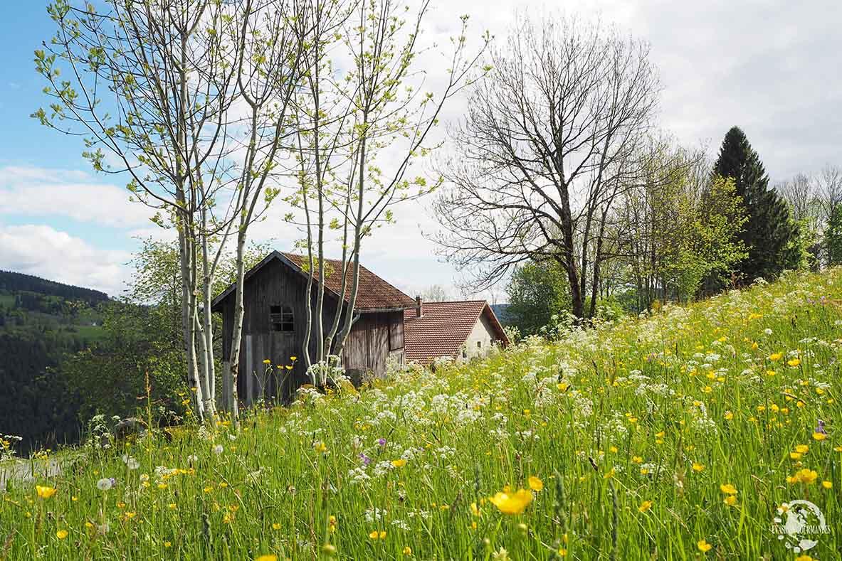 La Basse des Feignes la Bresse