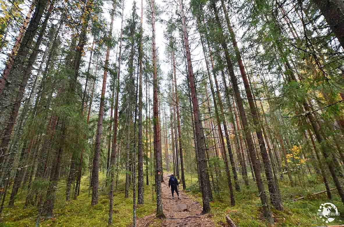 voyager en Finlande