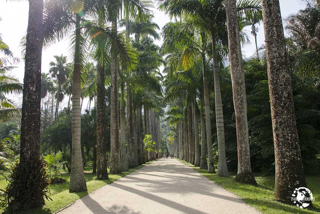 Jardin botanique Rio de Janeiro