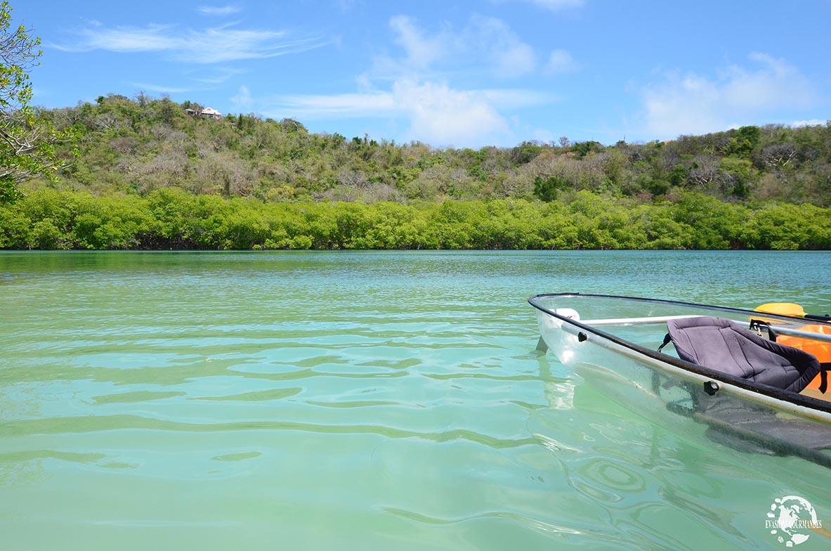 Kayak Martinique mangrove