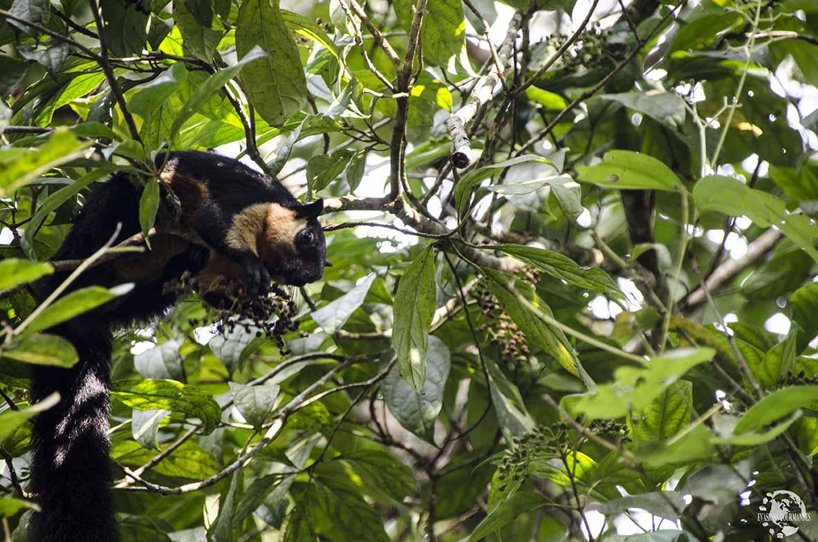 The Habitat Penang