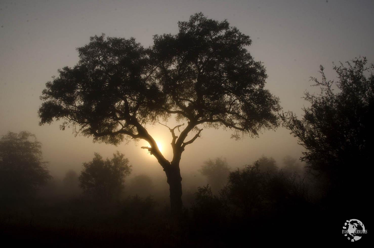 Safari de nuit au parc Kruger